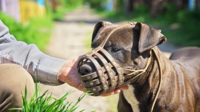 Photo : Meilleure muselière pour chien