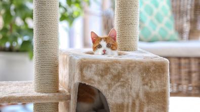 Photo : Meilleur arbre à chat