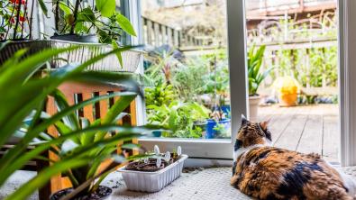 Photo : Meilleur répulsif pour chat