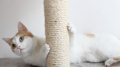 Photo : Meilleur griffoir pour chat