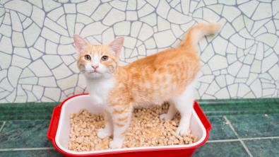 Photo : Meilleure litière pour chat