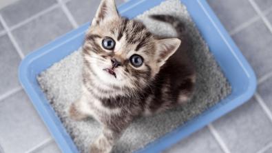 Photo : Meilleur bac à litière pour chat