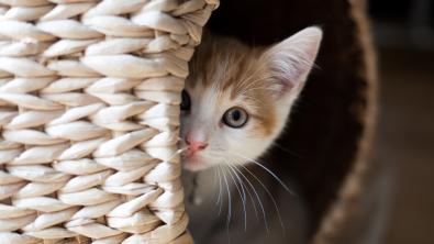 Photo : Meilleur panier pour chat
