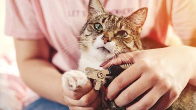 Photo : Meilleur coupe-griffes pour chat