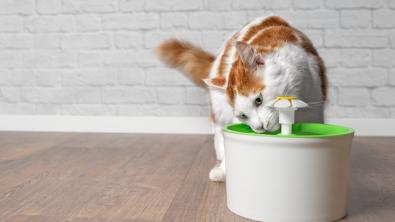 Photo : Meilleure fontaine à eau pour chat