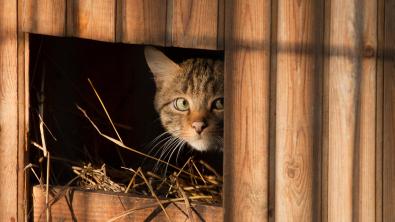 Photo : Meilleure niche pour chat