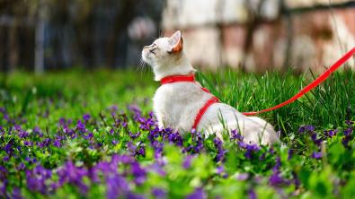 Photo : Meilleure laisse pour chat