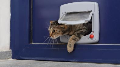 Photo : Meilleure chatière pour chat