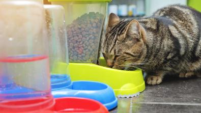 Photo : Meilleur distributeur de croquettes pour chat