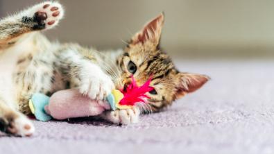 Photo : Meilleur jouet pour chat