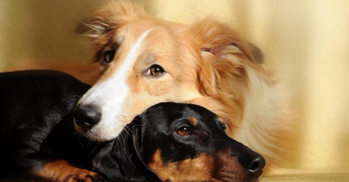 Deux chiennes qui doivent un peu simuler