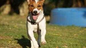 Illustration : Apprendre le rappel à son chien