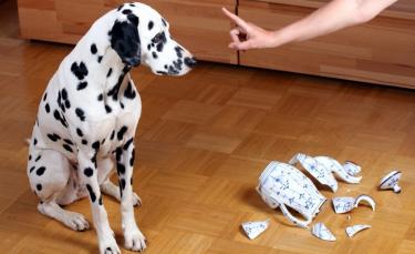 """Illustration : """"Maîtriser un chien destructeur"""""""