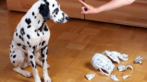 Illustration : Maîtriser un chien destructeur