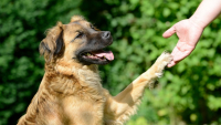 Illustration : Le stress chez le chien