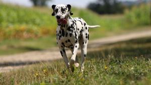 Illustration : Les plantes dangereuses pour le chien
