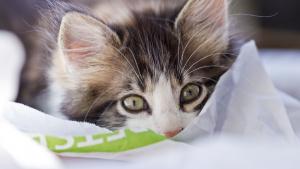 Illustration : Les maladies courantes chez le chat