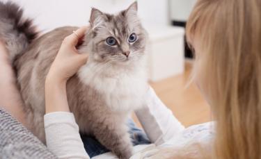 """Illustration : """"Mon chat est collant : que faire ?"""""""