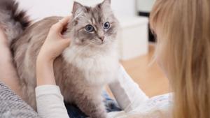Illustration : Mon chat est collant : que faire ?