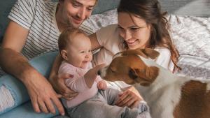 Illustration : Préparer son chien à l'arrivée d'un nouveau-né
