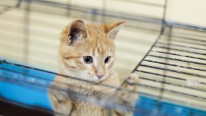 Illustration : Adopter un chat chez un particulier
