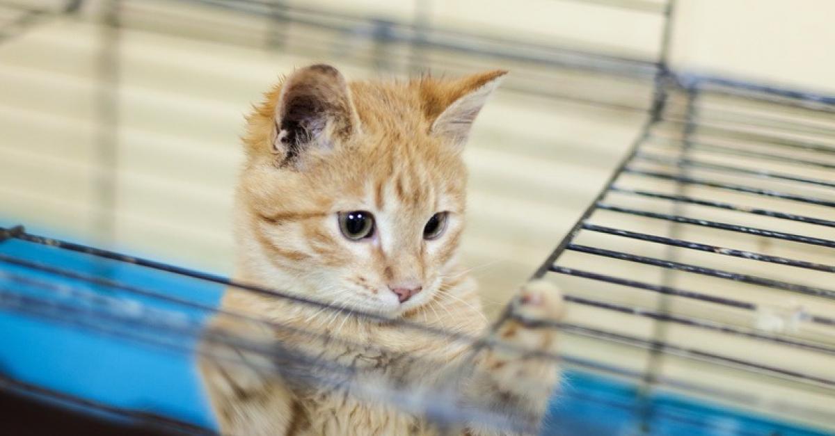 Adopter Un Chat Chez Un Particulier Les Precautions A Prendre