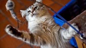 Illustration : Choisir les jouets pour son chat