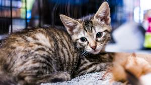 Illustration : Apprendre à son chat à utiliser sa litière