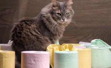 """Illustration : """"La diarrhée chez le chat"""""""