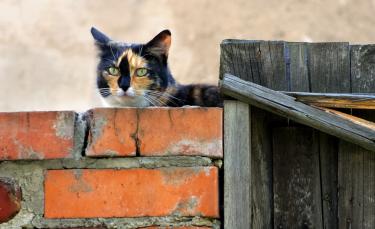 """Illustration : """"Mon chat a fugué : que faire ?"""""""