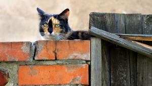Illustration : Mon chat a fugué : que faire ?