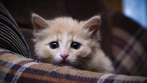 Illustration : Traiter l'anxiété du chat