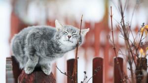 Illustration : Les 7 sens du chat