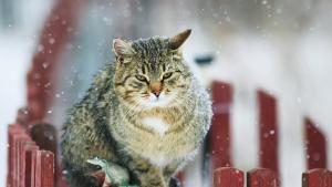 Illustration : Protéger son chat du froid