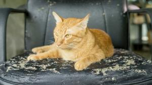 Illustration : Le marquage du territoire chez le chat