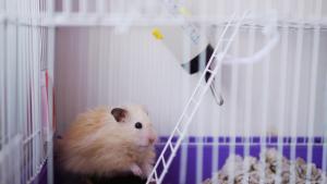 Illustration : Choisir une cage pour son hamster