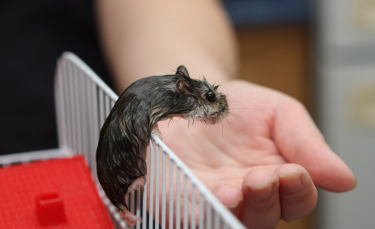 "Illustration : ""Les maladies courantes du hamster"""