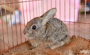 """Illustration : """"Choisir une cage pour son lapin"""""""