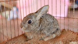 Illustration : Choisir une cage pour son lapin