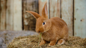 Illustration : Nourrir un lapin