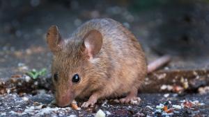Illustration : Quelle cage choisir pour votre souris ?