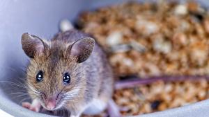 Illustration : Nourrir une souris
