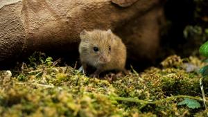 Illustration : Les maladies courantes de la souris