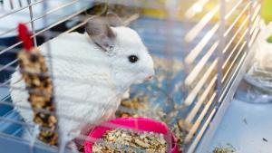 Illustration : Choisir une cage pour son chinchilla