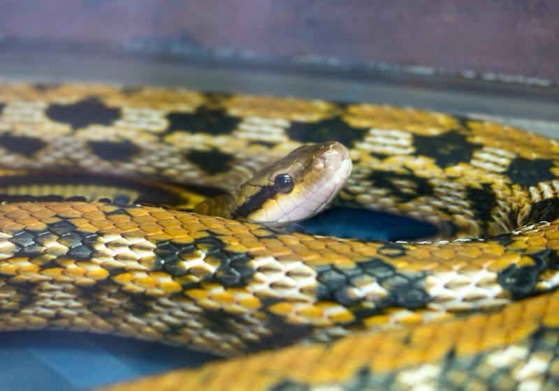 """Illustration : """"Choisir son premier serpent"""""""