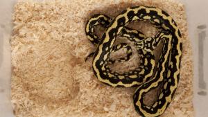 Illustration : Quel terrarium choisir pour son serpent ?