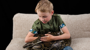 Illustration : Comment manipuler un serpent ?