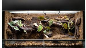 Illustration : Quel terrarium choisir pour son lézard ?