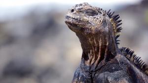 Illustration : Nourrir un iguane