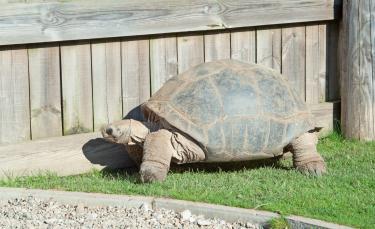 """Illustration : """"Quel enclos ou terrarium choisir pour sa tortue terrestre ? """""""